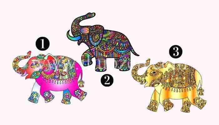 Scegli un elefante e ricevi un messaggio importante