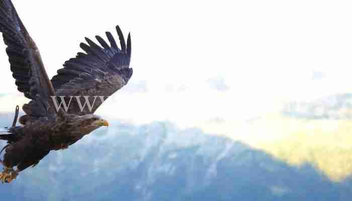 Impara a credere in te stesso. Leggi la Parabola del Falco