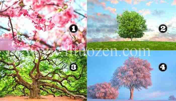 Se non sei soddisfatto della tua vita, scegli un albero e riceverai un messaggio di conforto