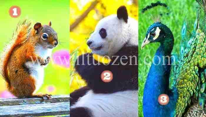 Questi 3 animali dicono molto sulla tua personalità. Quale scegli?