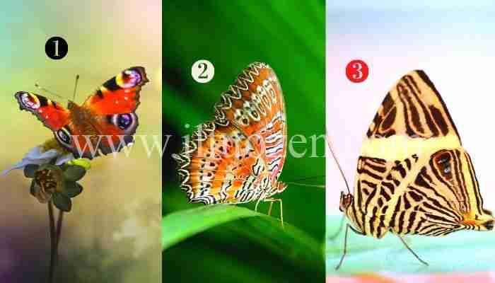 Scegli una farfalla e scopri come alleggerire la tua anima