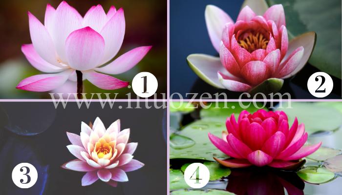 Scegli un fiore di loto e ricevi una potente purificazione dell'anima