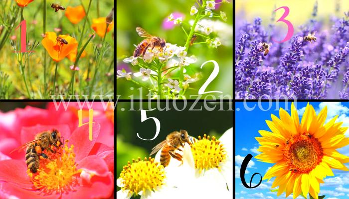 Se tu fossi un'ape, su quale fiore ti poseresti? Dimmelo e rivelerò il tratto distintivo della tua personalità
