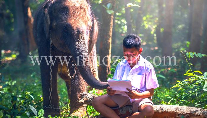 Se hai dei periodi in cui l'autostima ti cala a picco, leggi la parabola dell'elefante incatenato