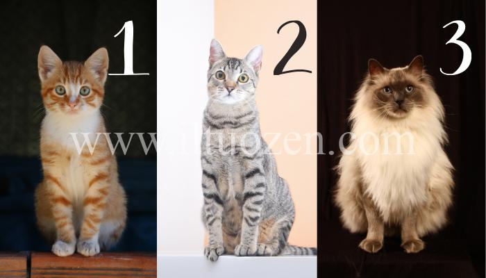 I gatti sono incredibili Maestri Zen. Scegline uno e ascolta il suo prezioso consiglio