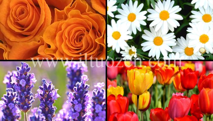 Qual è il tuo fiore preferito? In base alla tua scelta, ti darò un consiglio che ti farà riflettere