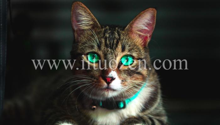 Lo sapevi che i gatti sono considerati animali mistici e magici? Ecco come ci aiutano