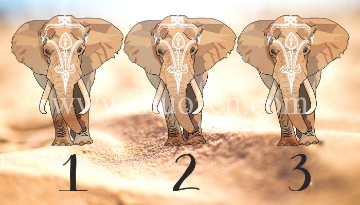 Scegli un elefante e riceverai un messaggio di buona fortuna