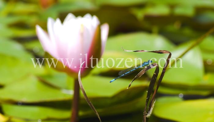 Vedi spesso le libellule? Allora dovresti conoscere il loro meraviglioso significato spirituale: