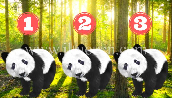 Scegli un panda e ti tirerò su il morale dedicandoti queste parole d'amore