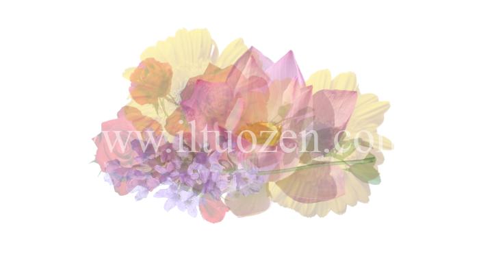 Quale fiore hai visto per primo? In base alla tua prima impressione, riceverai un prezioso consiglio di vita