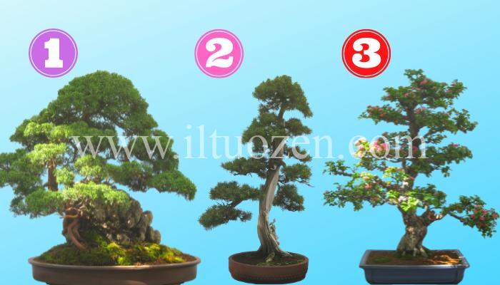 Scegli un bonsai e coltiva la tua mente praticando questi saggi consigli di vita: